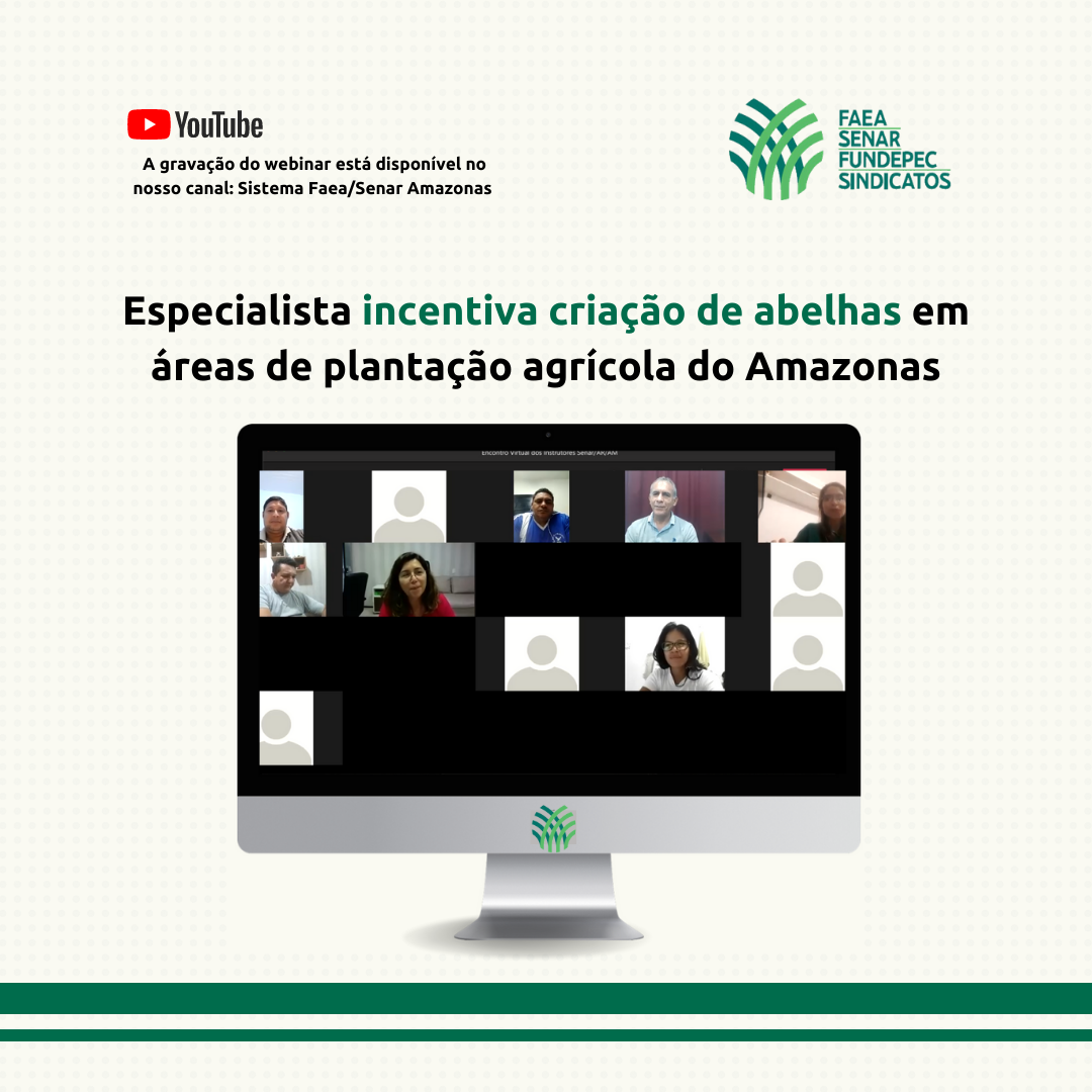 Especialista incentiva criação de abelhas em áreas de plantação agrícola do Amazonas