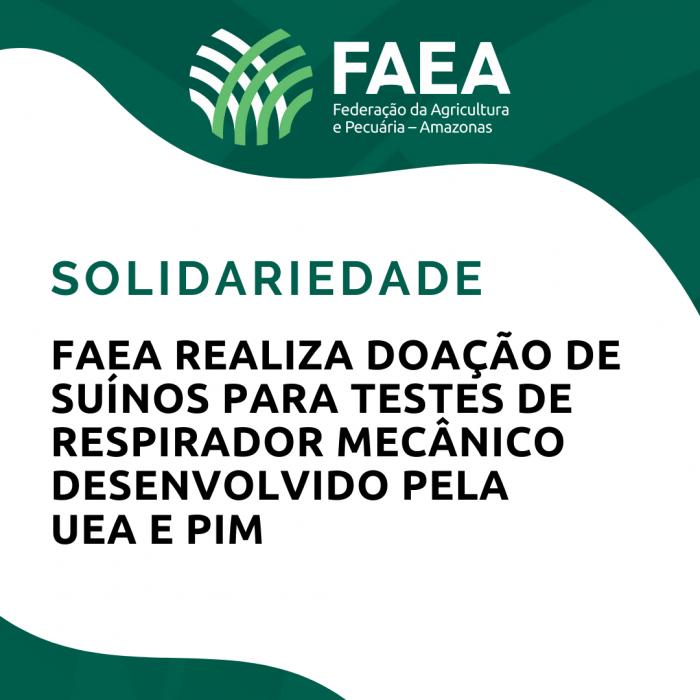 FAEA Realiza doação de suínos para testes de respirador mecânico desenvolvido pela UEA  PIM